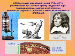 А 300 лет назад английский ученый Роберт Гук, рассматривая бутылочную пробку