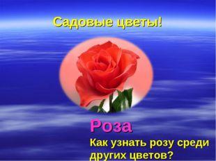 Садовые цветы! Роза Как узнать розу среди других цветов?