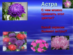 Астра С чем можно сравнить этот цветок? Какой окраски бывают астры?