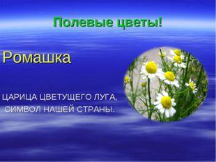 Полевые цветы! Ромашка ЦАРИЦА ЦВЕТУЩЕГО ЛУГА, СИМВОЛ НАШЕЙ СТРАНЫ.