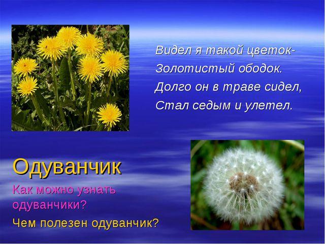 Видел я такой цветок- Золотистый ободок. Долго он в траве сидел, Стал седым и...
