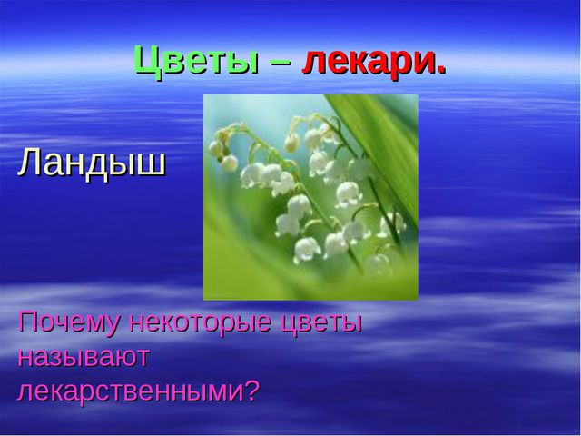Цветы – лекари. Ландыш Почему некоторые цветы называют лекарственными?
