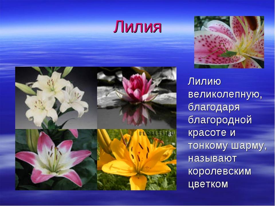 Лилия Лилию великолепную, благодаря благородной красоте и тонкому шарму, назы...
