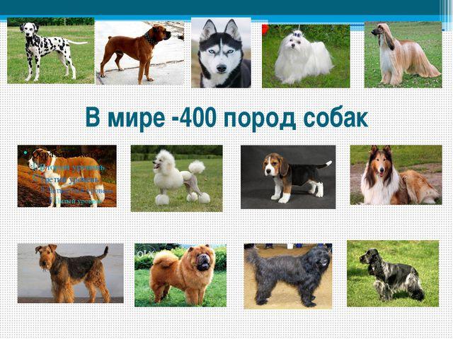 В мире -400 пород собак