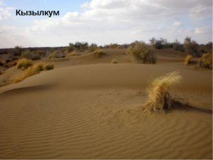 Мойынкум Бетпакдала Сарыесик Атырау Сарыесик Атырау Мойынкум Песчаная равнина
