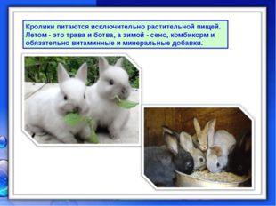 Кролики питаются исключительно растительной пищей. Летом - это трава и ботва,