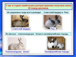 У нас в стране наибольшее распространение получили около 20 пород кроликов. И
