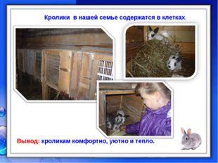 Кролики в нашей семье содержатся в клетках. Вывод: кроликам комфортно, уютно