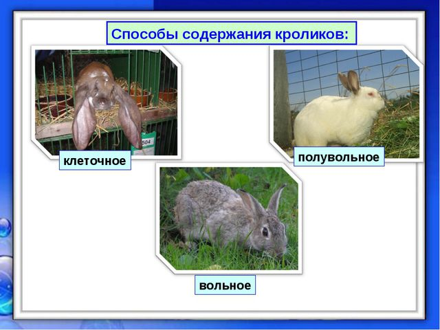 Способы содержания кроликов: вольное полувольное клеточное