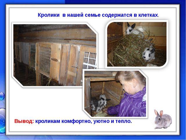 Кролики в нашей семье содержатся в клетках. Вывод: кроликам комфортно, уютно...