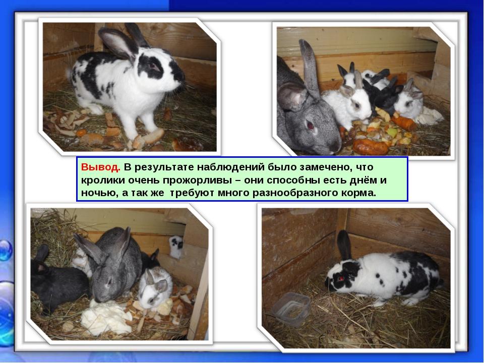 Вывод. В результате наблюдений было замечено, что кролики очень прожорливы –...