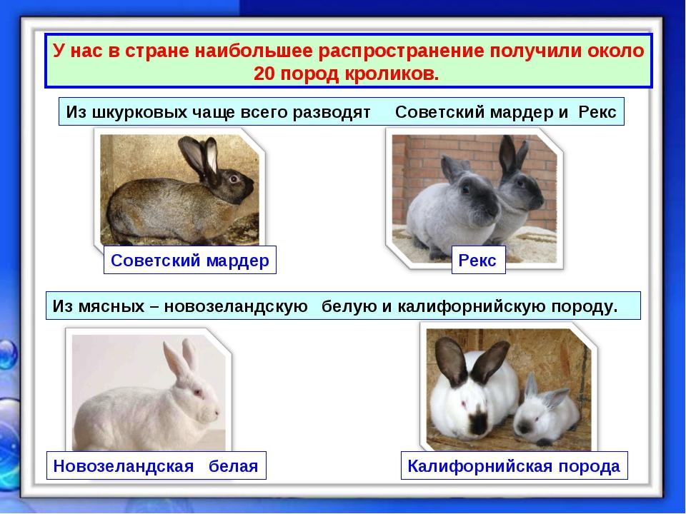 У нас в стране наибольшее распространение получили около 20 пород кроликов. И...