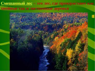 Смешанный лес – это лес, где произрастают как хвойные так и лиственные деревья