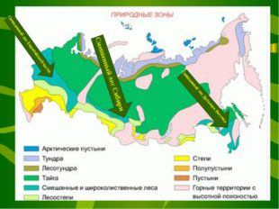 Смешанный лес Европейской части Смешанный лес Сибири Смешанный лес Дальнего В