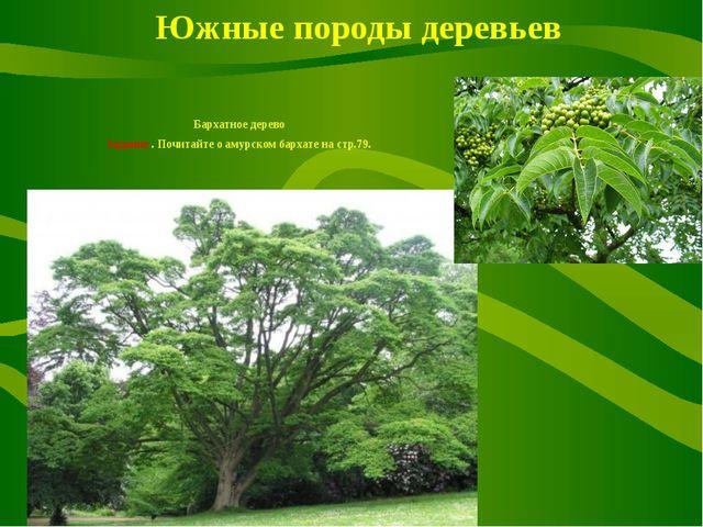 Южные породы деревьев Бархатное дерево Задание . Почитайте о амурском бархат...