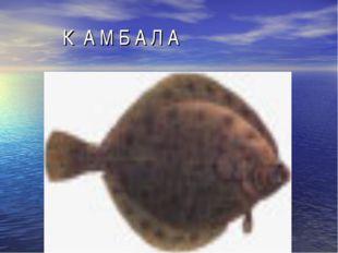 К А М Б А Л А