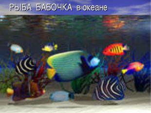 РЫБА БАБОЧКА в океане
