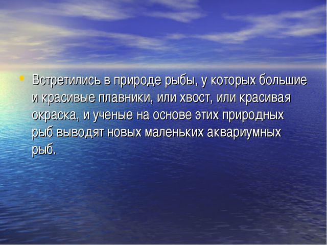 Встретились в природе рыбы, у которых большие и красивые плавники, или хвост,...