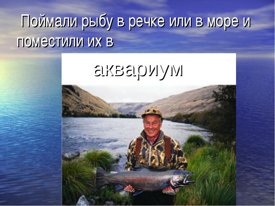 Поймали рыбу в речке или в море и поместили их в аквариум