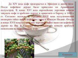 До XIV века кофе произрастал в Эфиопии в диком виде. После кофейное дерево
