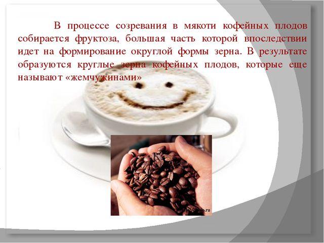 В процессе созревания в мякоти кофейных плодов собирается фруктоза, больша...