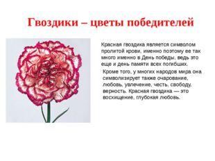 Гвоздики – цветы победителей Красная гвоздика является символом пролитой кров
