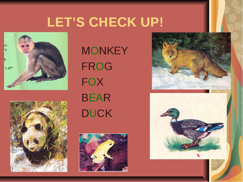 LET'S CHECK UP! MONKEY FROG FOX BEAR DUCK