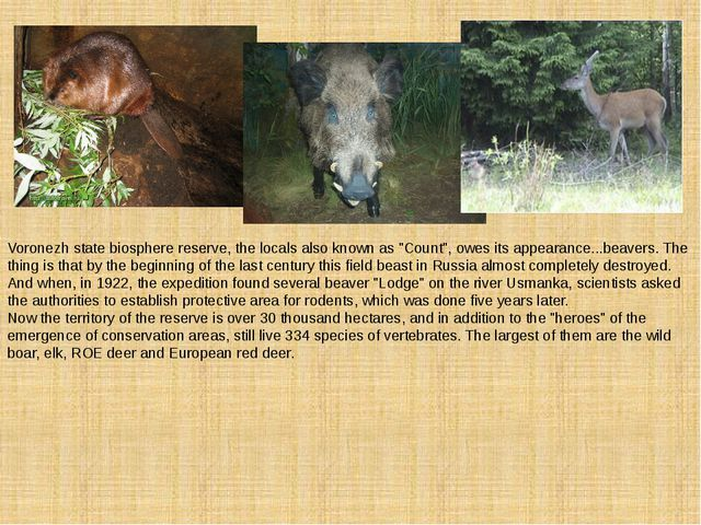 """Voronezh state biosphere reserve, the locals also known as """"Count"""", owes its..."""