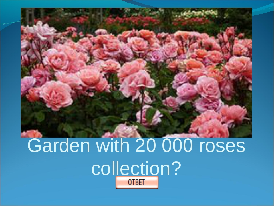 Where is Queens Rose Garden with 20 000 roses collection?
