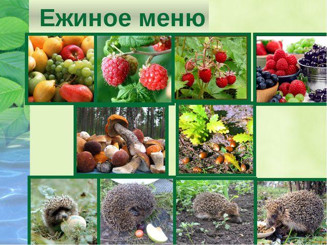 Ежиное меню