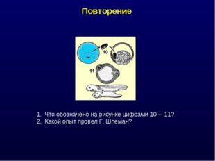Повторение Что обозначено на рисунке цифрами 10— 11? Какой опыт провел Г. Шпе
