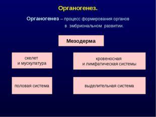 Органогенез. Органогенез – процесс формирования органов в эмбриональном разви