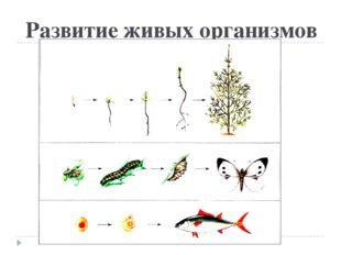 Развитие живых организмов