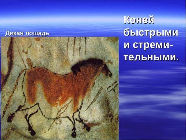 Дикая лошадь Коней быстрыми и стреми- тельными.