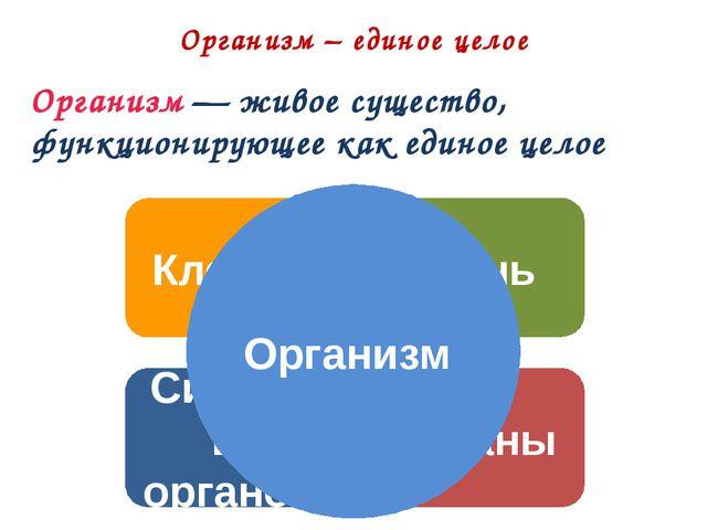 Организм – единое целое Клетка Ткань Органы Системы органов Организм — живое...