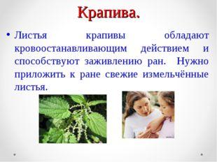 Крапива. Листья крапивы обладают кровоостанавливающим действием и способствую