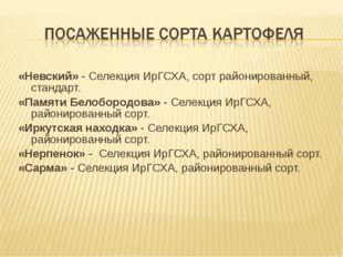 «Невский» - Селекция ИрГСХА, сорт районированный, стандарт. «Памяти Белоборо