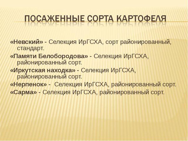 «Невский» - Селекция ИрГСХА, сорт районированный, стандарт. «Памяти Белоборо...