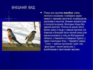 ВНЕШНИЙ ВИД Птица чуть крупнее воробья, очень плотного сложения, голубовато-с
