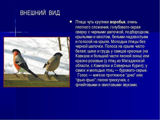 ВНЕШНИЙ ВИД Птица чуть крупнее воробья, очень плотного сложения, голубовато-с...