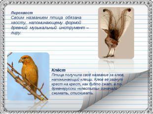 Клёст Птица получила своё название за клюв, напоминающий клещи. Клюв её загну
