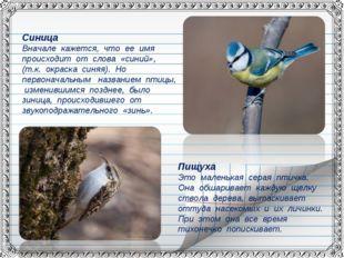 Синица Вначале кажется, что ее имя происходит от слова «синий», (т.к. окраска