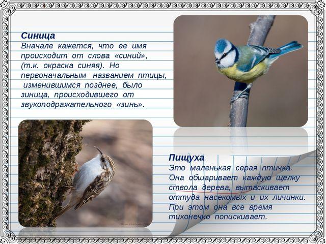 Синица Вначале кажется, что ее имя происходит от слова «синий», (т.к. окраска...