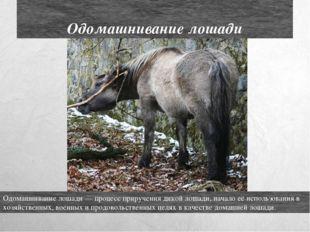 Одомашнивание лошади Одомашнивание лошади — процесс приручения дикой лошади,