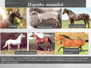 Породы лошадей Породы лошадей — группы домашних лошадей, которые обладают ген