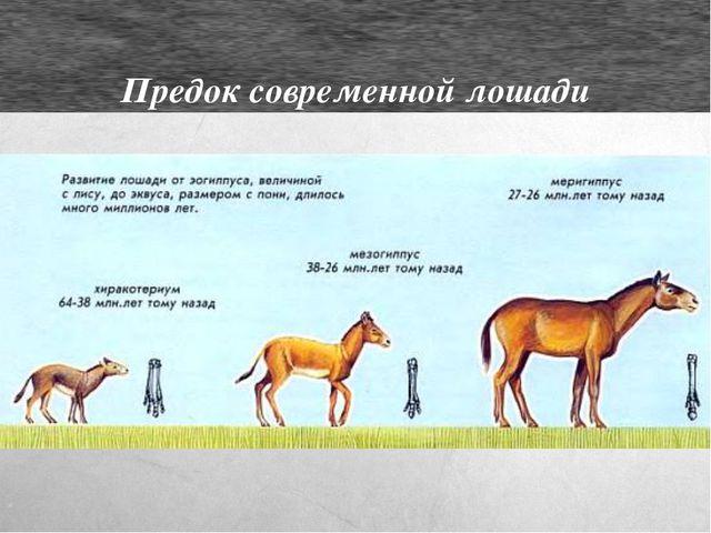 Предок современной лошади