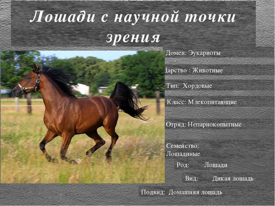 Лошади с научной точки зрения Домен: Эукариоты Царство : Животные Тип: Хордов...
