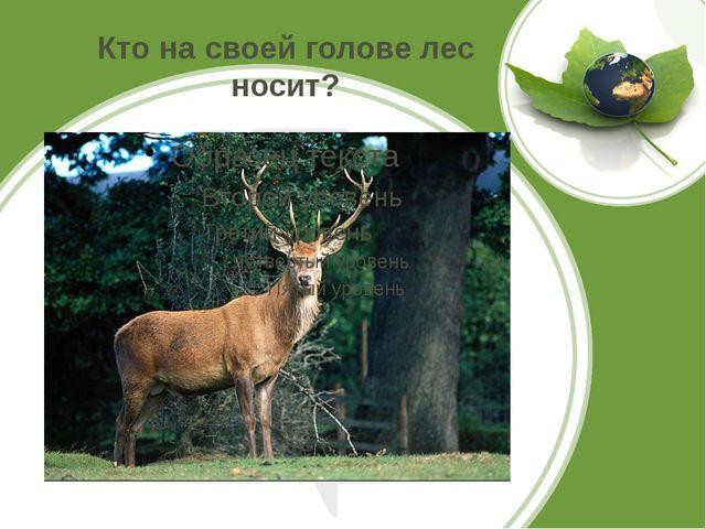 Кто на своей голове лес носит?