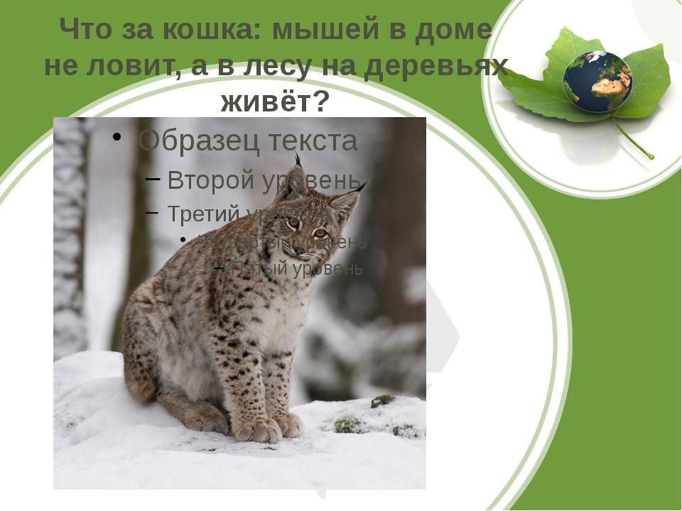 Что за кошка: мышей в доме не ловит, а в лесу на деревьях живёт?