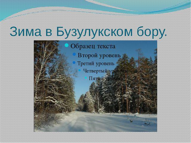 Зима в Бузулукском бору.